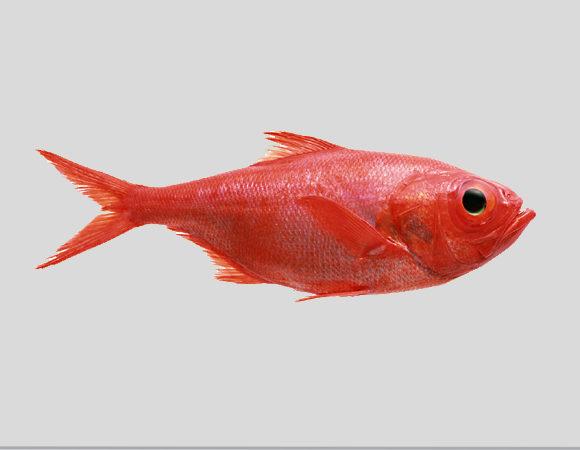 Рыба, морепродукты, пресервы